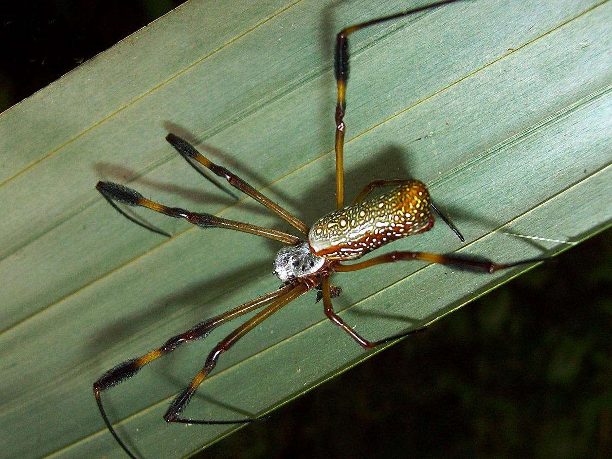 0737-spider.jpg