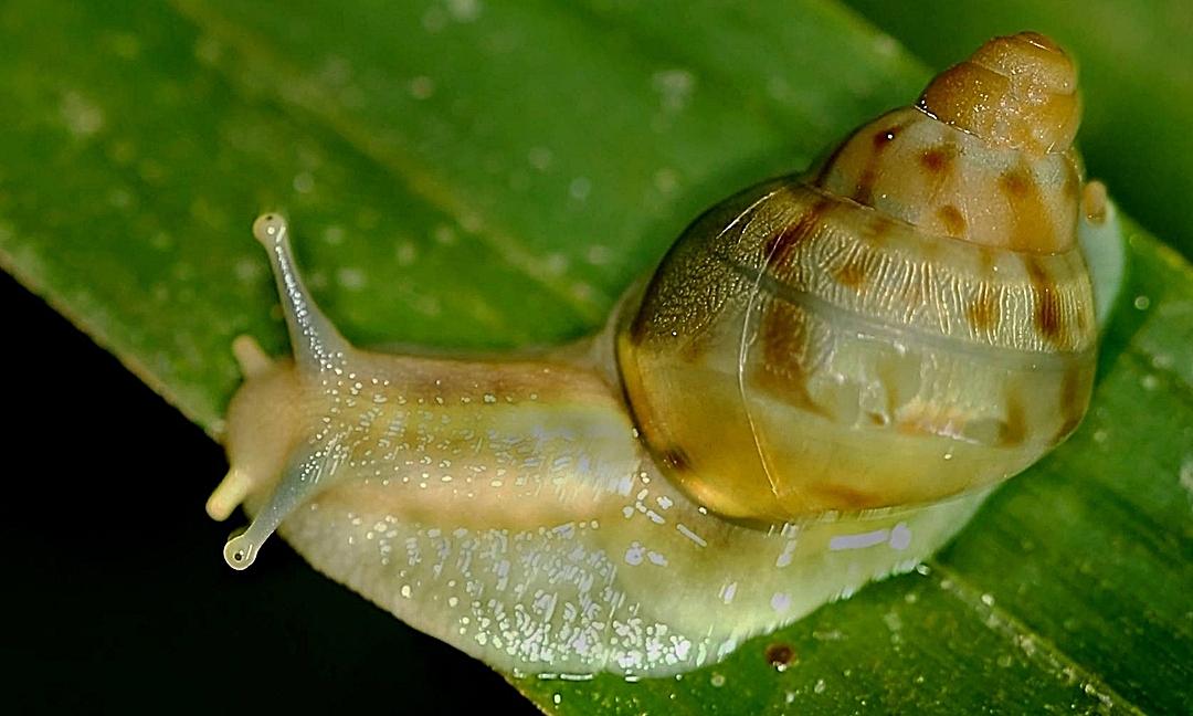 0674-snail.jpg