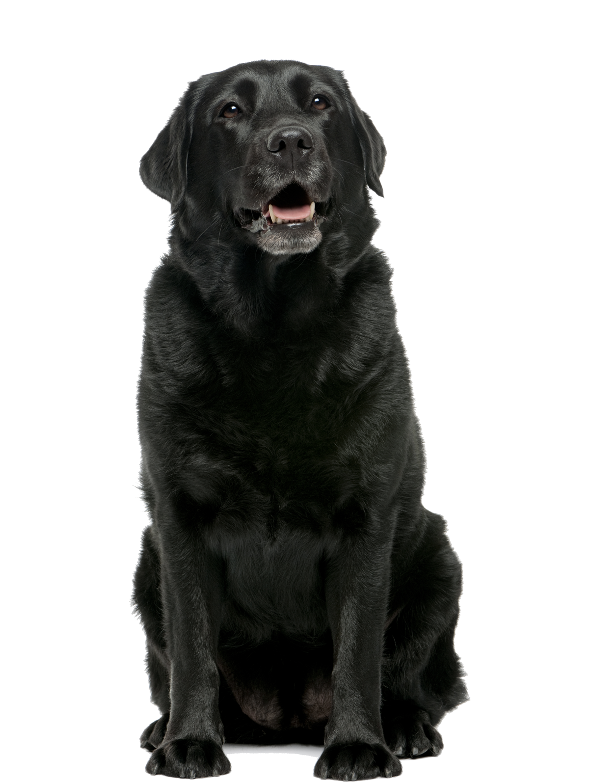 home-page-black-lab.png