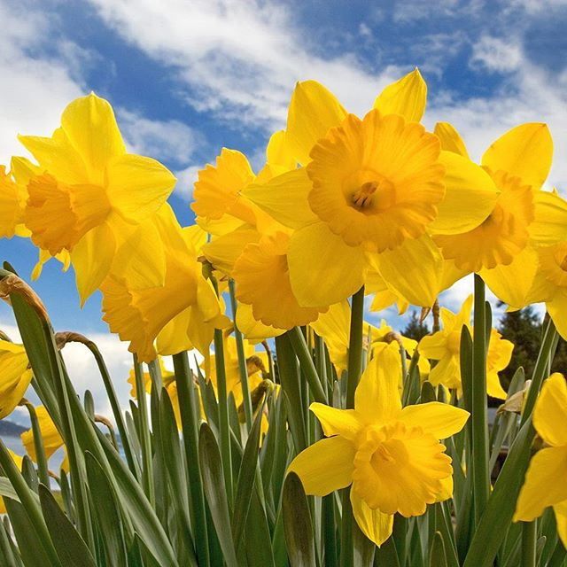 Team Health Hub are proud to raise awareness and encourage others to donate to @ccswellington this Daffodil Day, 31st August.  Supporting the fighters, admiring the survivors, honouring the taken and never ever giving up hope 🙏🏽😍🌈