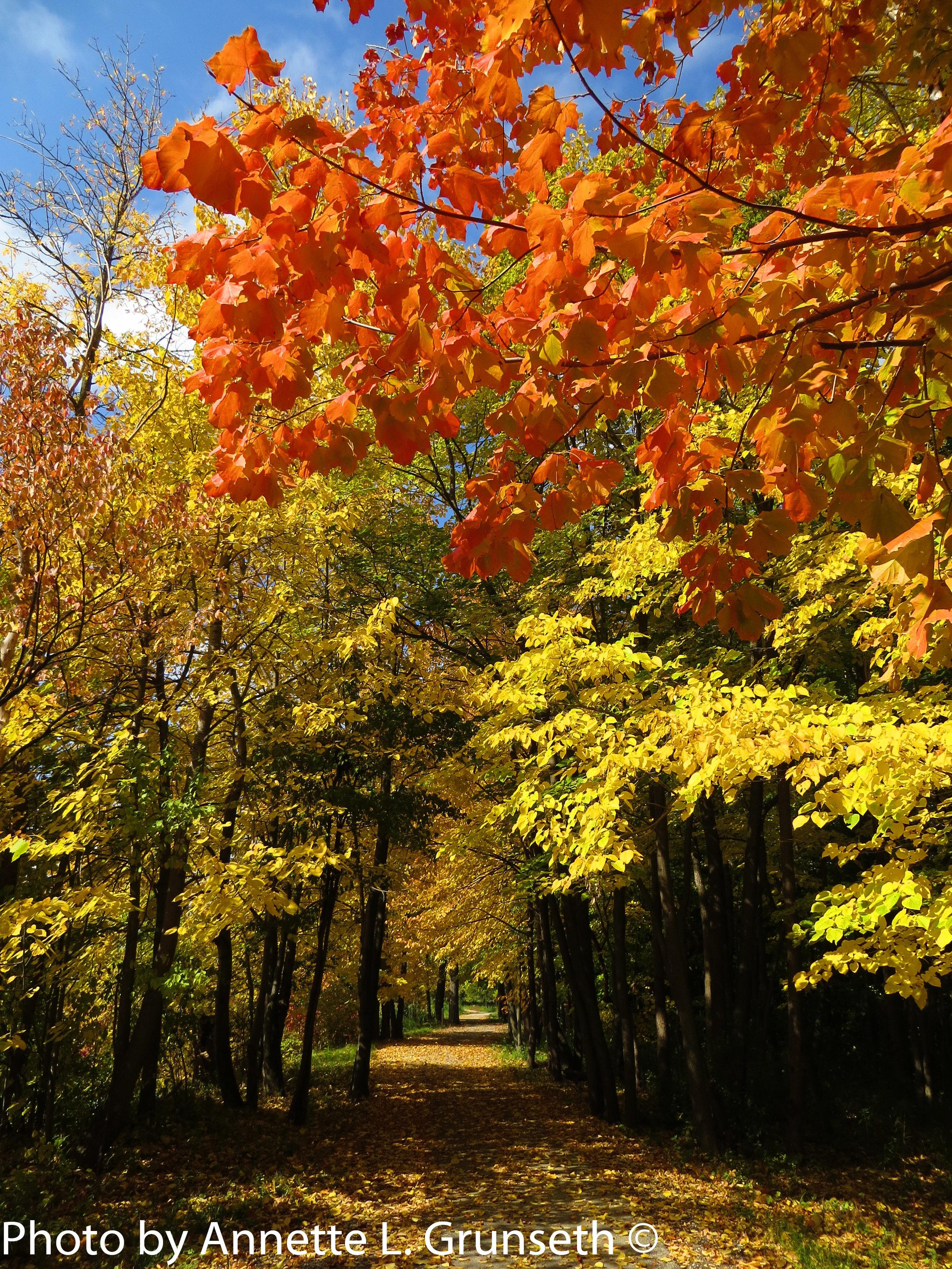 Grunseth-Allouez-East RiverBike Trail.jpg