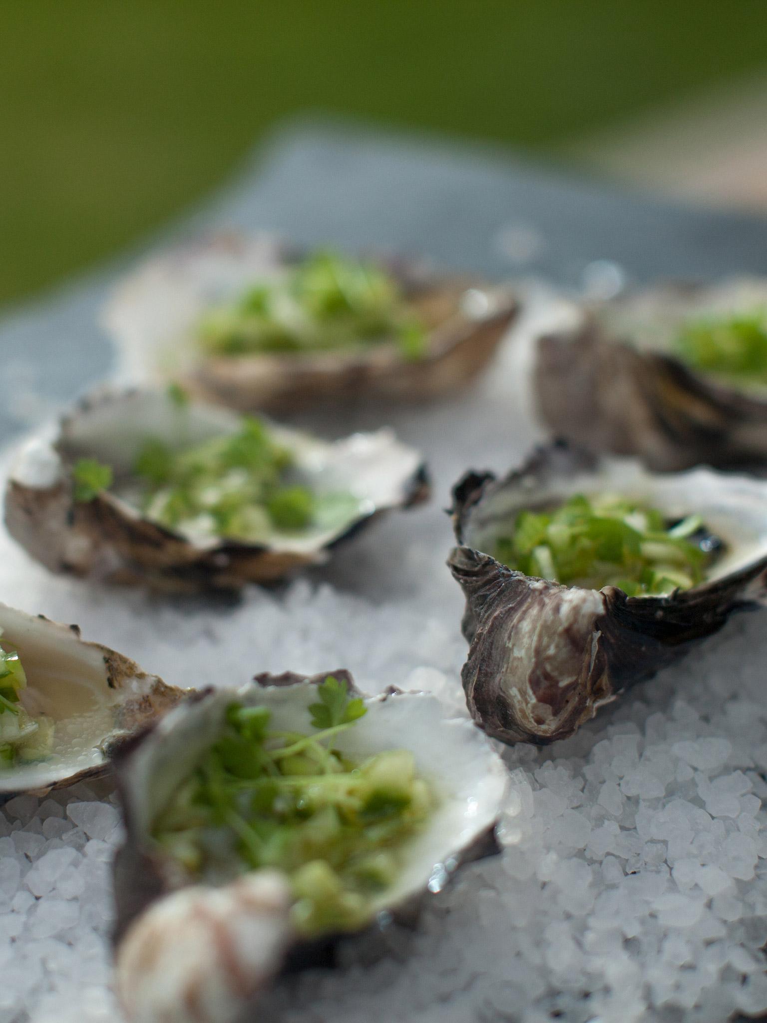 Oysters-web.jpg
