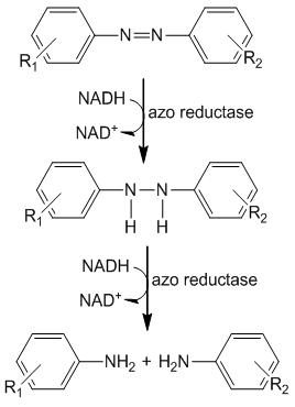 Enzymes like azoreductases can degrade azo dyes into aromatic amines. The azo bond cleavage involves a transfer of four electrons, which proceeds through two stages at the azo-linkage. Credit:Environment and Climate Change Canada