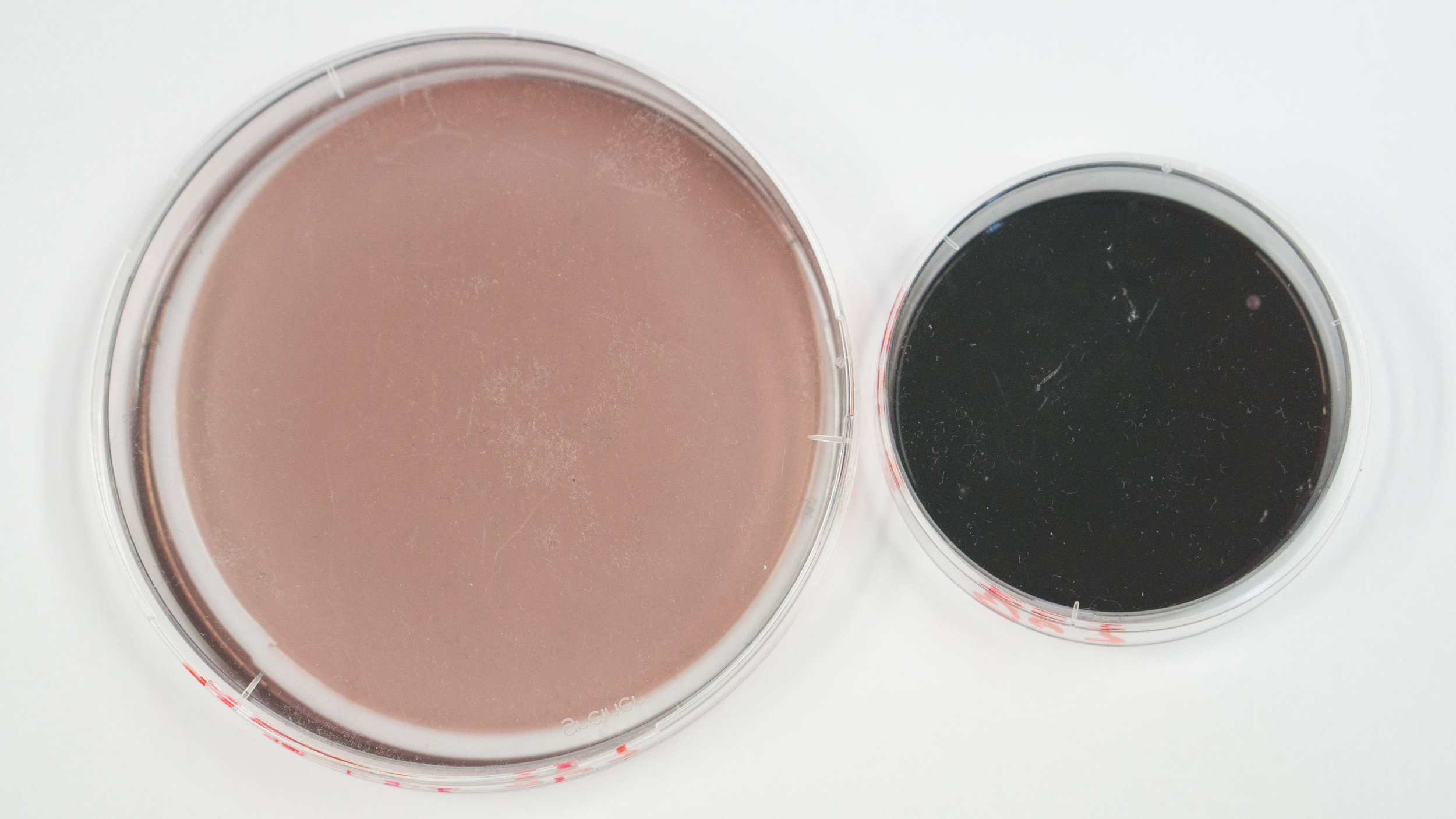 Agar plates pre-mixed with 0.03% (left) and 0.15% (right) dye concentration