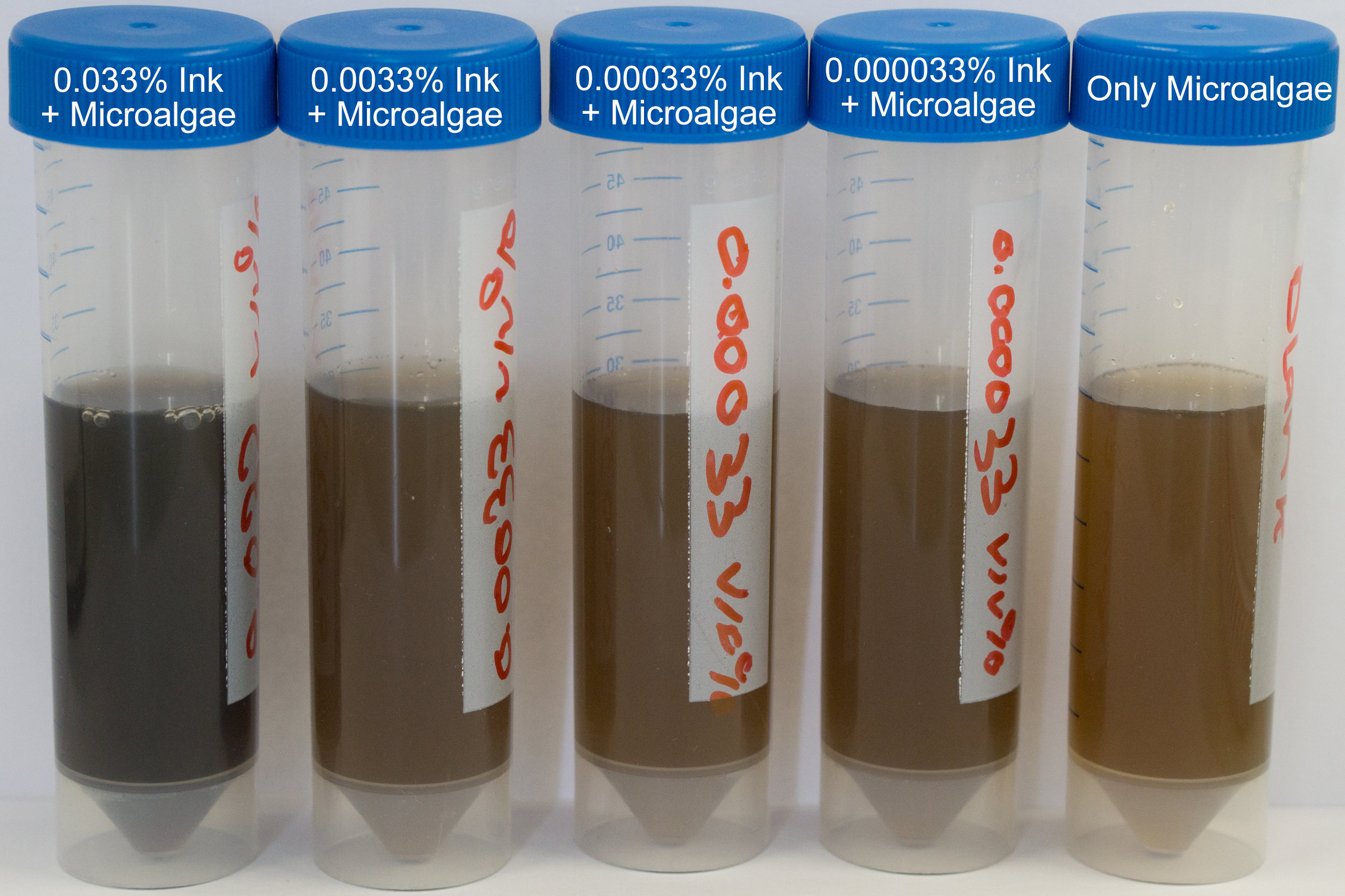 Different concentration of ink samples mixed with microalgae after 1.5 weeks cultivation. No evidence of the decolourisation had showed and same results were retrieved after measuring their UV spectrums.