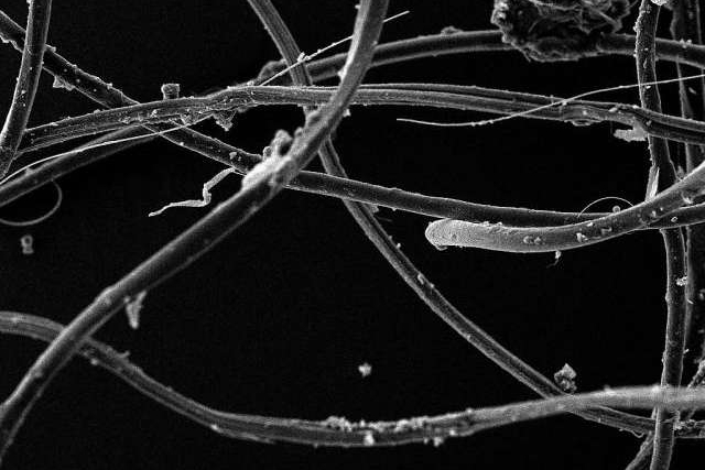 Another waste issue created by textile industry - Microfiber Pollution. Synthetic fibres used by fast fashion will contaminate our ocean; the picture is a clump of acrylic fibres seen under microscopes. Credit: University of Plymouth
