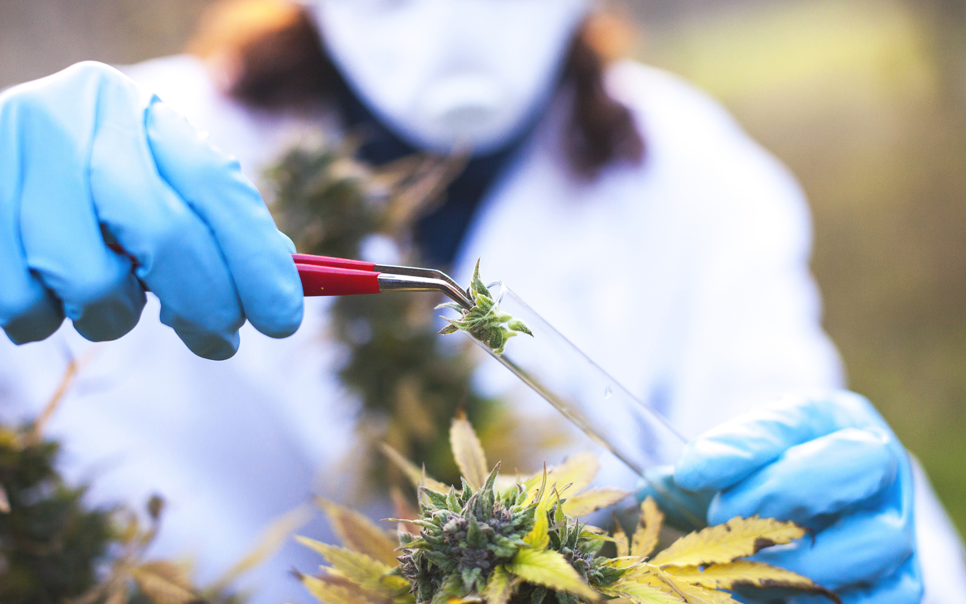 Part 2, The Latest in Cannabis Research: Summer 2018