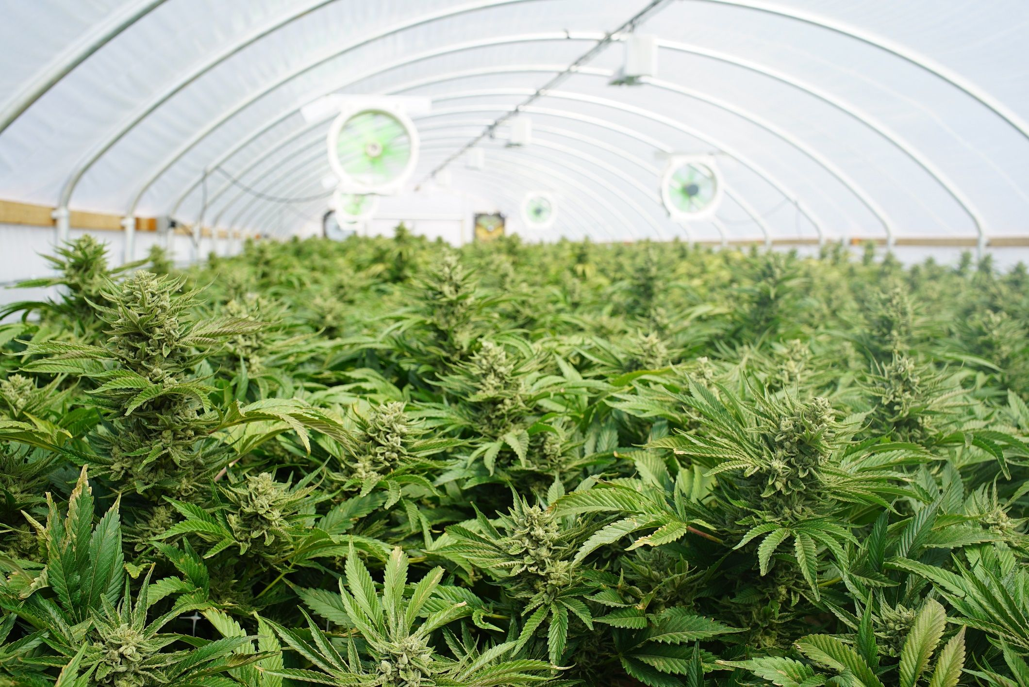 Aurora Cannabis International Operational Update: Company Ships Mother Plants to Denmark to Populate Aurora Nordic Phase I