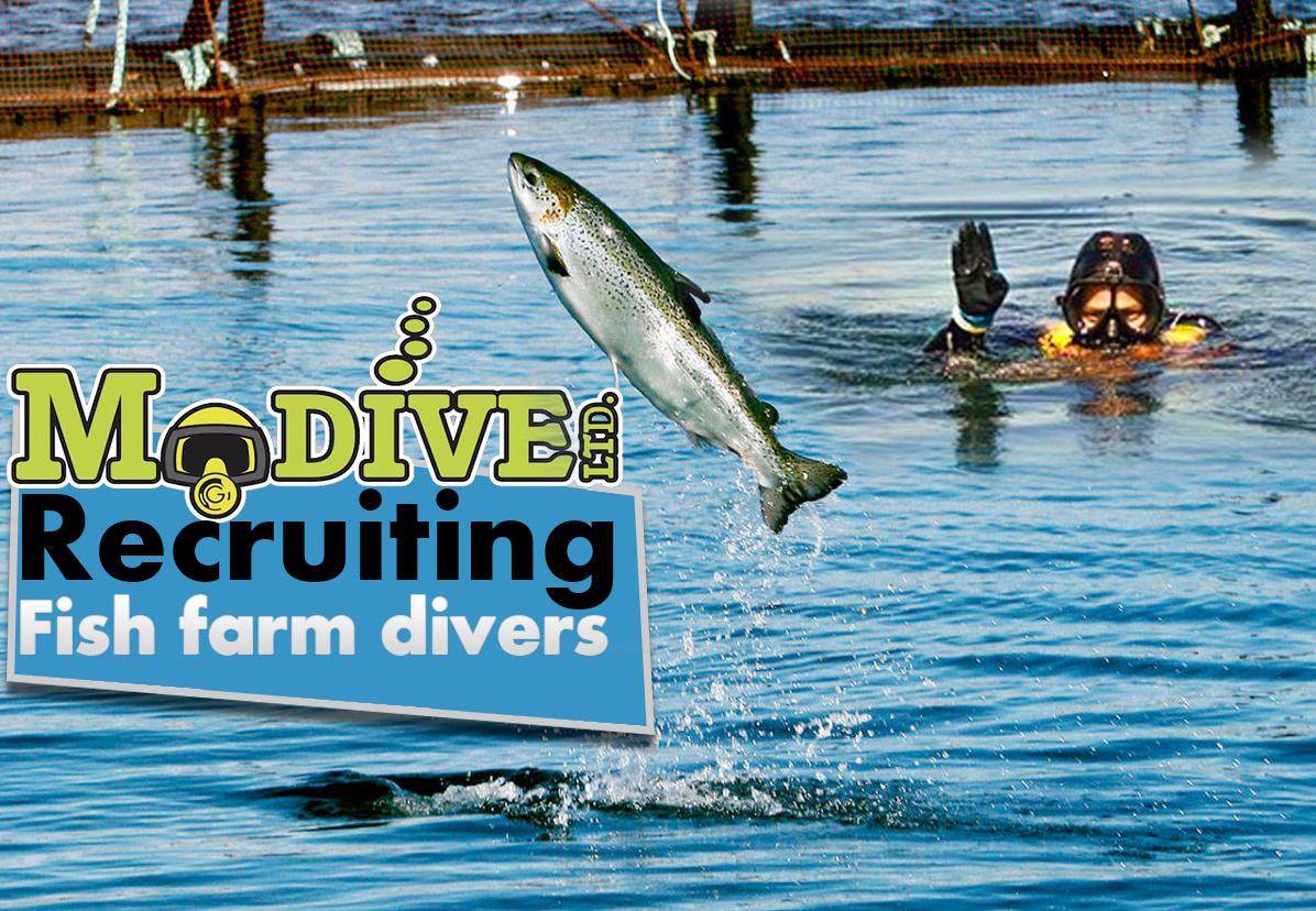 fish farm divers.jpg