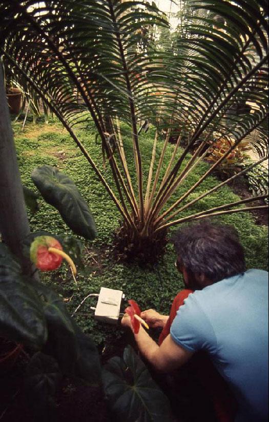 John Lifton prepares a plant for live performance.