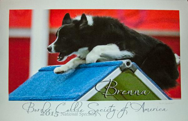 Brenna_Pup_art_photo_IMG_6927-600x387 (1).jpg