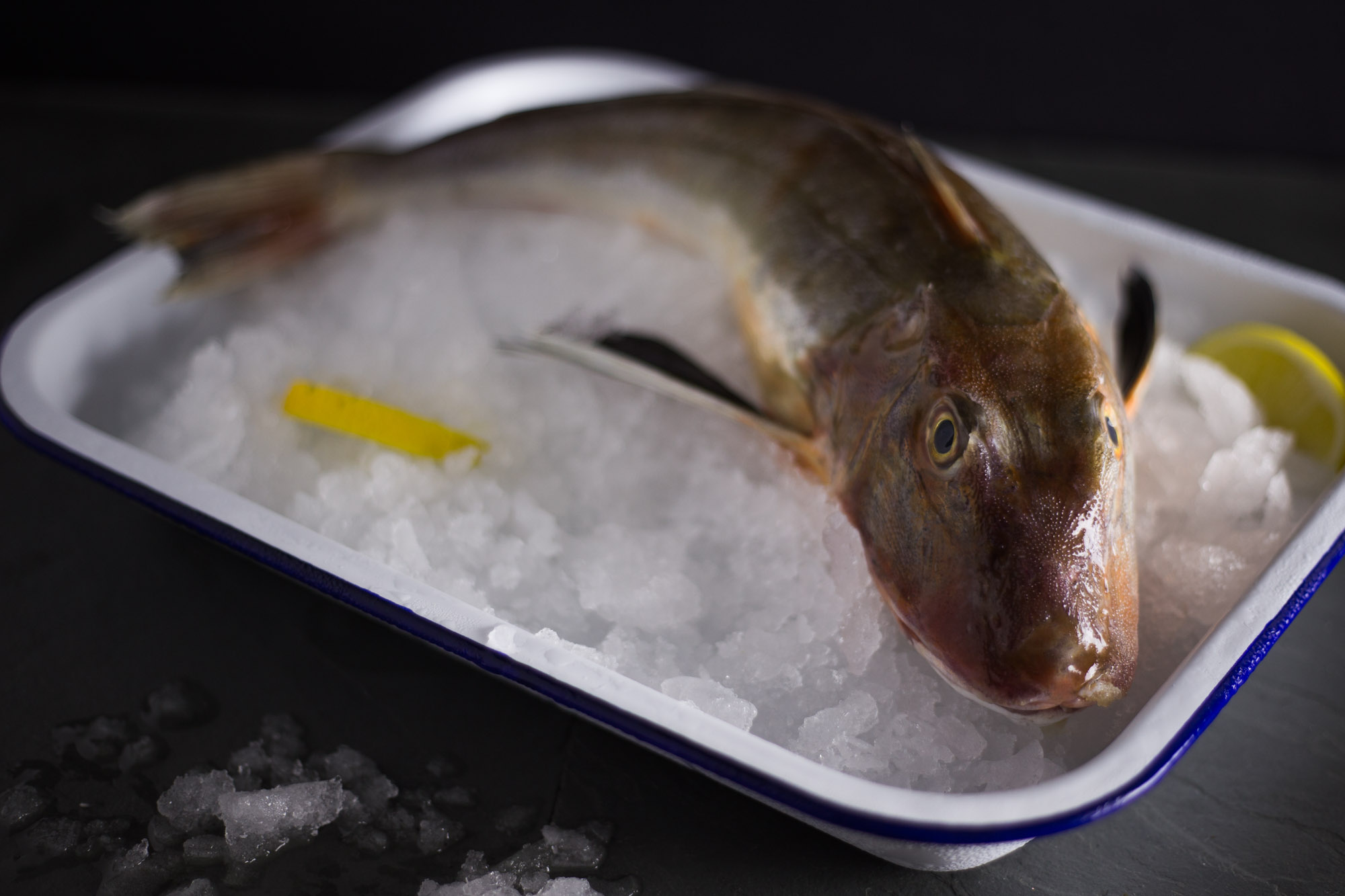 SHOP WATERDANCE GURNARD