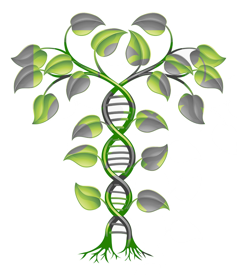 holistic-medicine-MD 2.jpg
