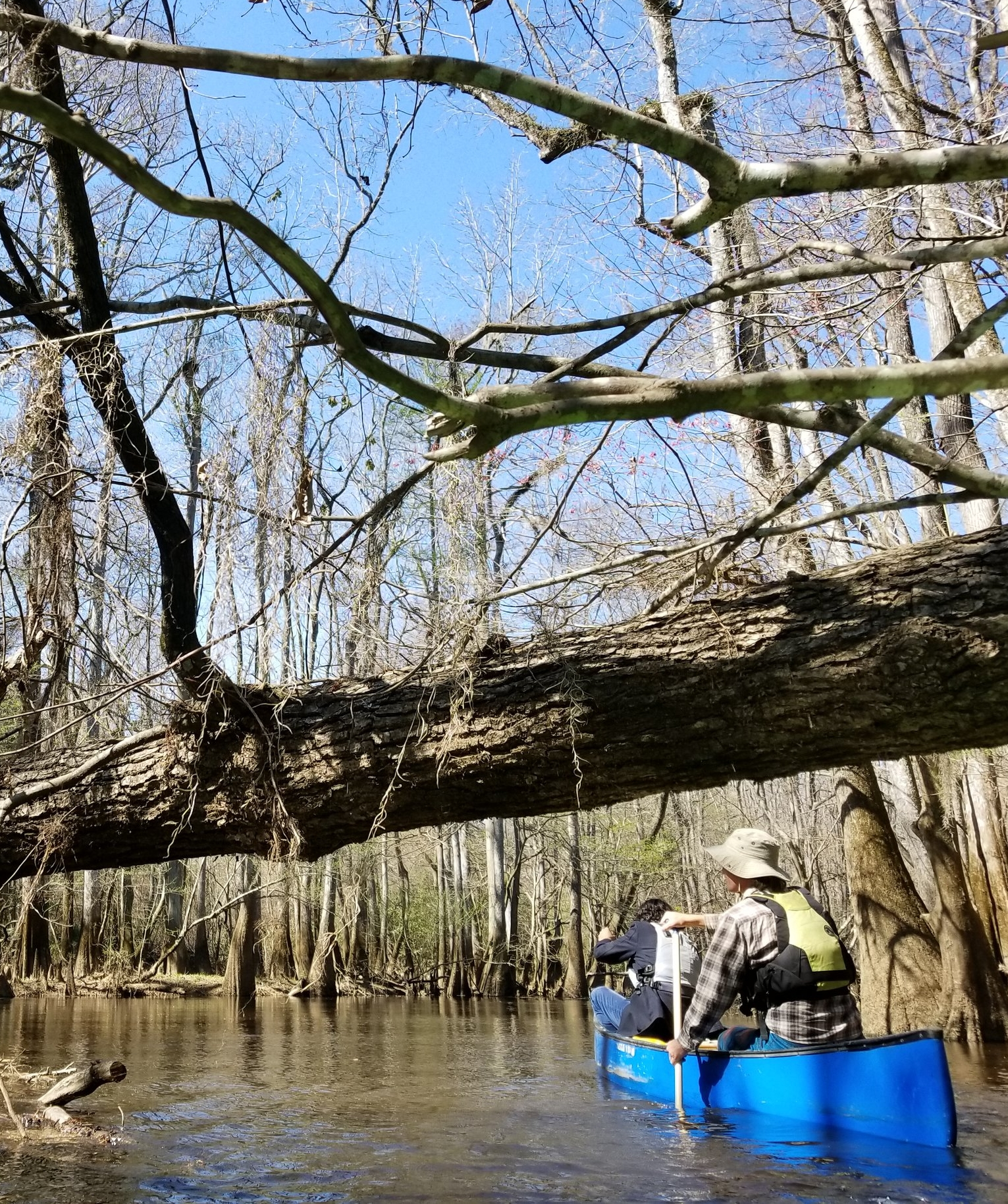 Congaree National Park guided kayaking/canoeing trips.  These trips are only offered in the Spring and Fall. Group sizes are limited without advanced notice. This is a 3 hour trip (on the water) that is about 30 minutes from Columbia. Wear old shoes and bring a change of cloths. Bathrooms are available to change at the start or end of the trip. $80.  www.palmettooutdoor.com