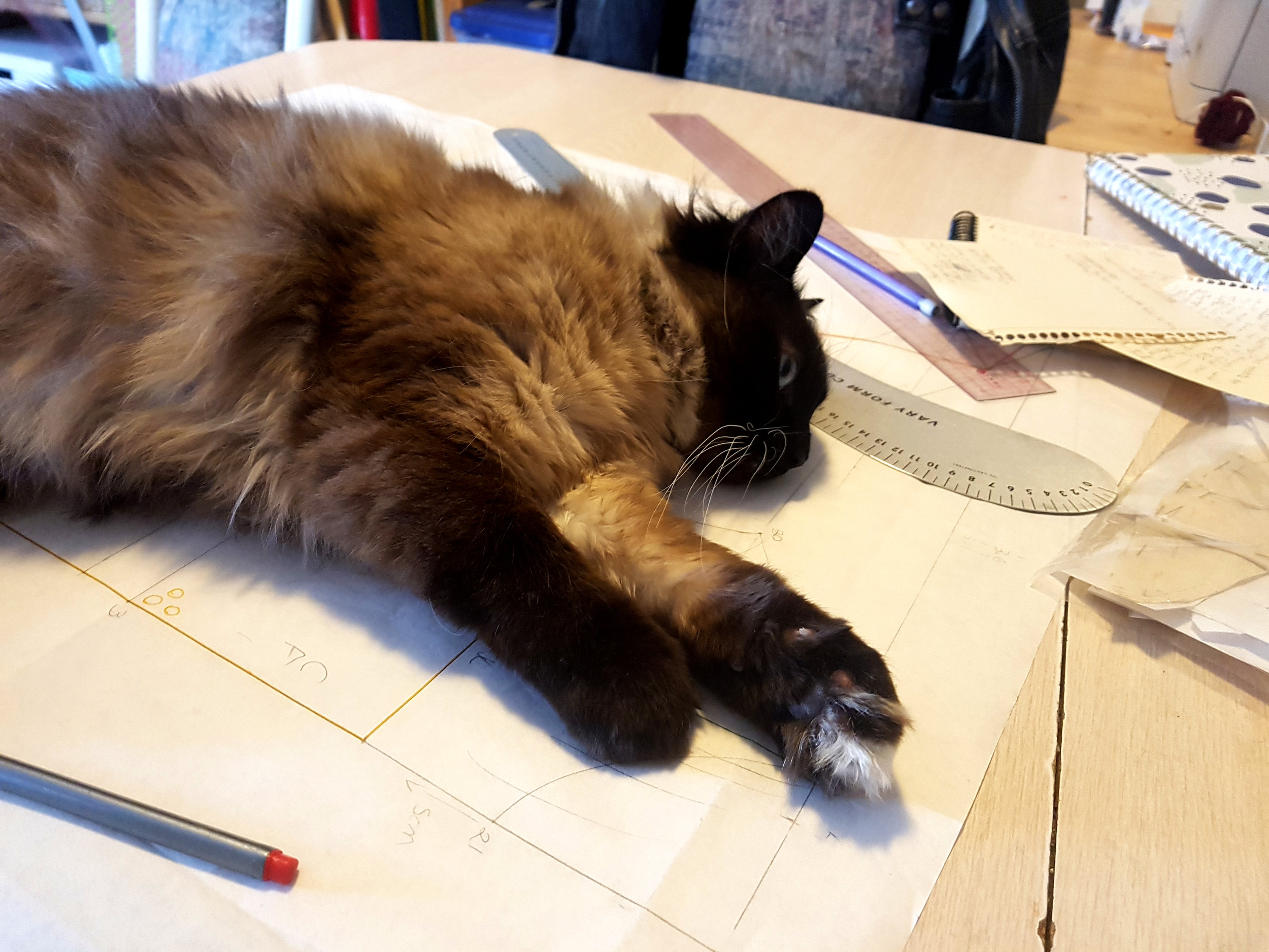 Seymour, my terrible assistant, laying on a pattern drafting project on my table. There's rulers and pencils scattered around. Seymour is a himalayan siamese with a dark face and paws, long fur, big blue eyes, and whiskers for days. His toe beans are nubbins. His stomach is fluffy. And he's just daring you to touch it.  (Don't touch it, he's a liar.)