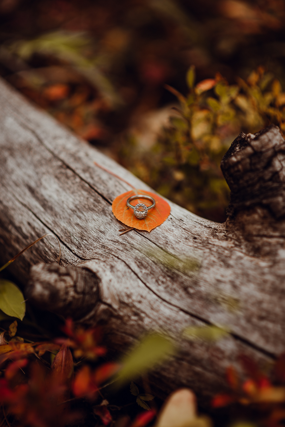 PHOCO photography boulder colorado fall engagement Rachael Garrett Yellow-18.jpg