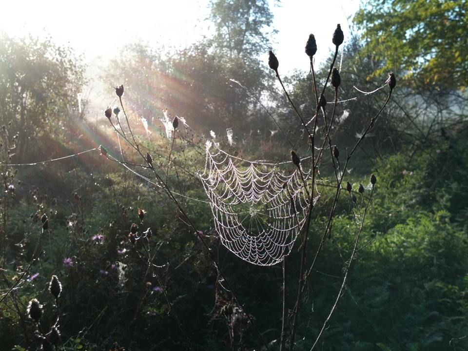 Spider Web in Morning Light.jpg