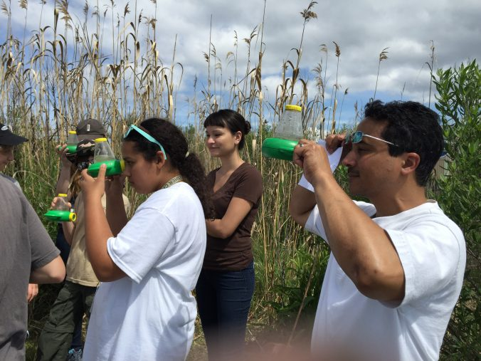 Youth of all ages learn about wetland ecology.