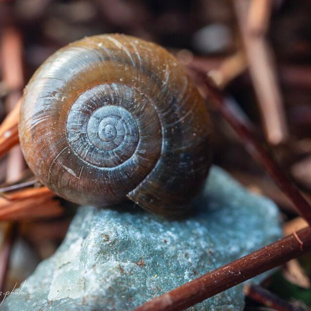 EF_Snail.jpg
