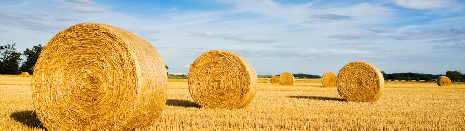 farm-banner.jpg