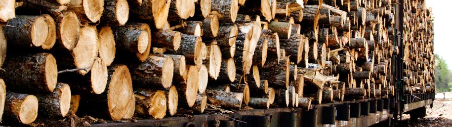 logging-banner.jpg