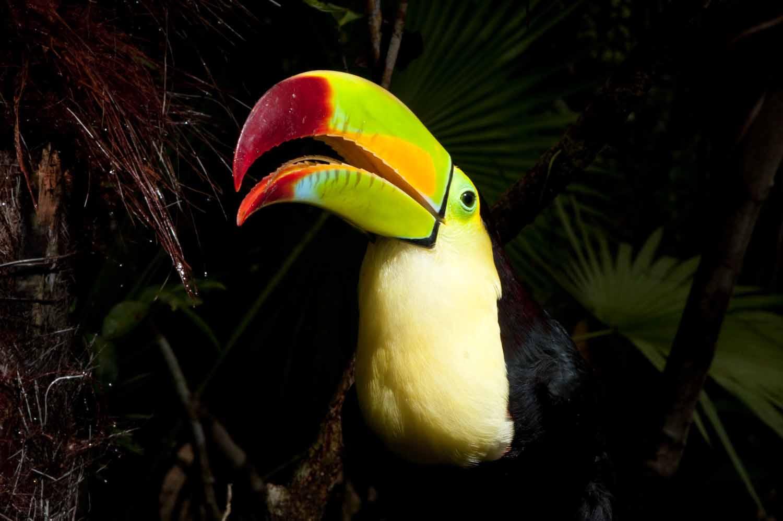 BelizeZoo2.jpg