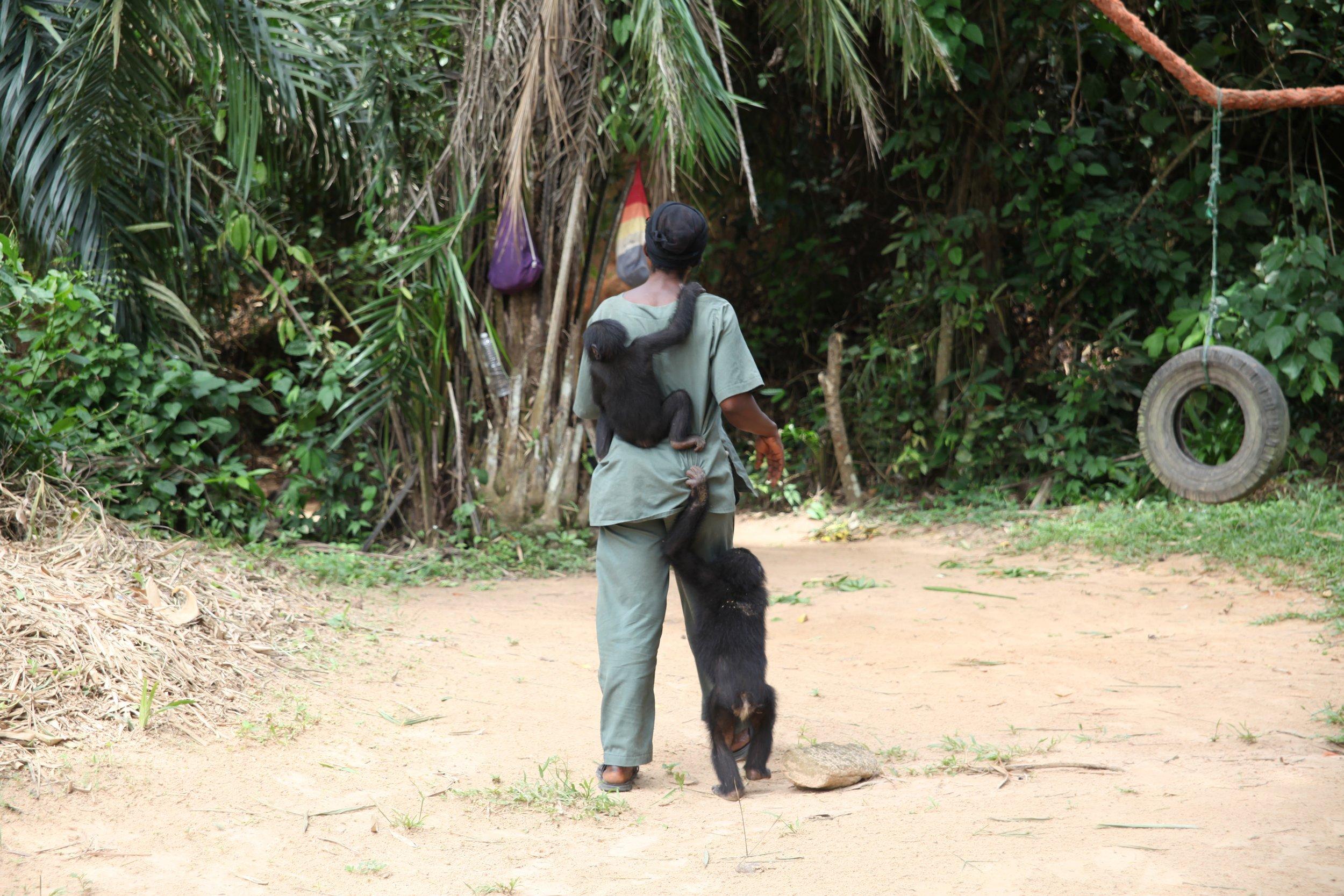 Bonobo 1.jpg