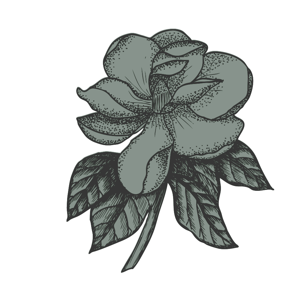 creations-without-category-magnolia-sketch.png
