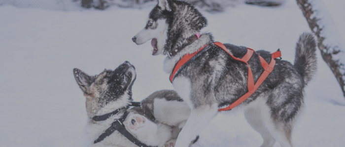 """Ashley is fabulous ... Incredibly knowledgeable  Great presence around our ""girls"". We have 2 - 18 month female Husky's who are littermates. Ashley's advise / tips - lessons has had a noticeable improvement on the girls behaviors. We would recommend Ashley 100%.""  -  Elaine (and Nikita & Rhea)"