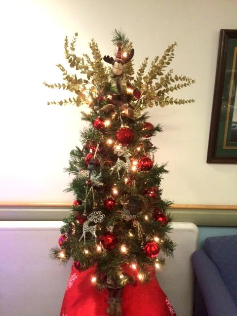 EDO Construction Tree 2015 1.jpg