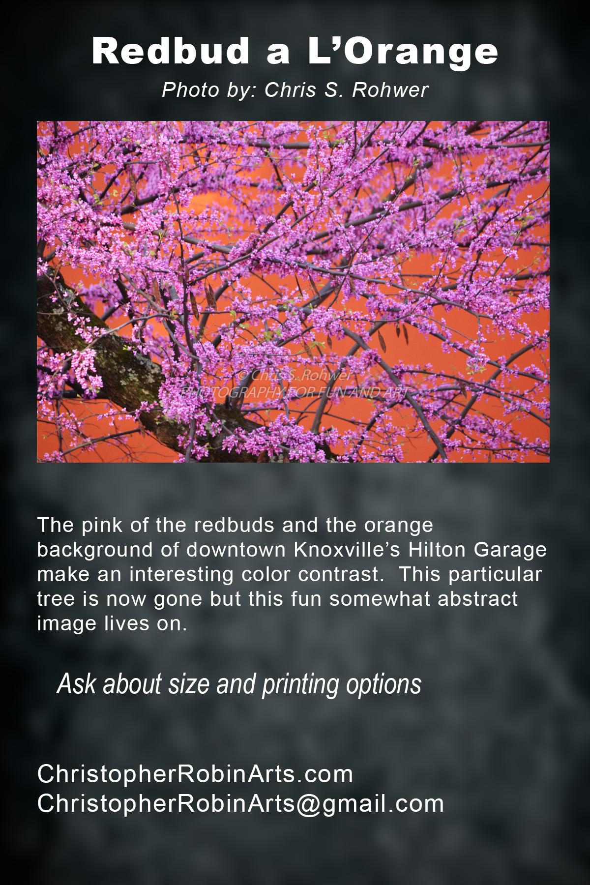 Redbud a l'Orange.jpg
