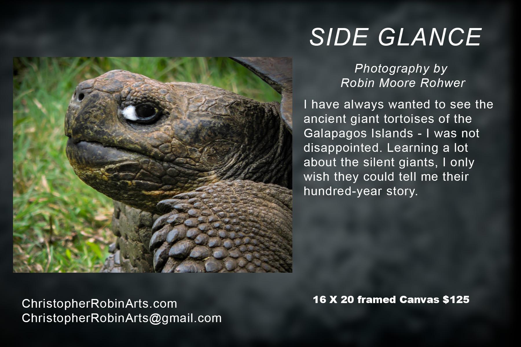 Side Glance.jpg