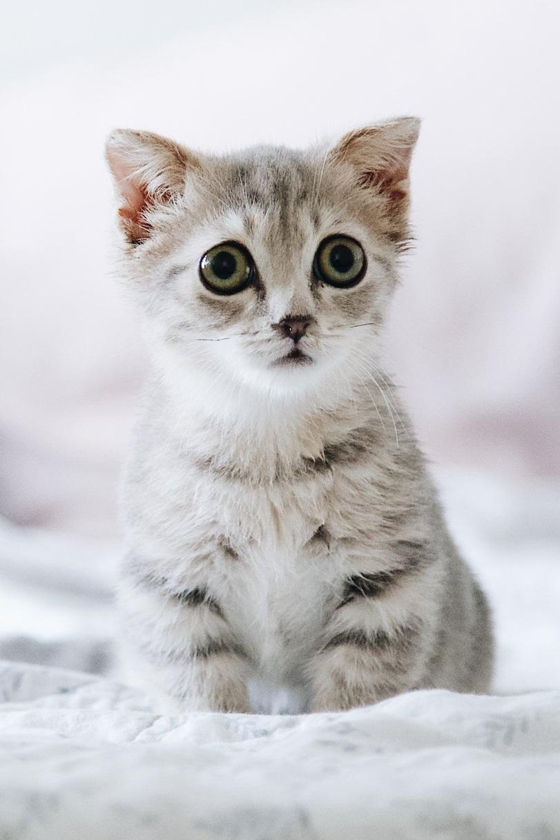 adorable-animal-bed-2061057.jpg