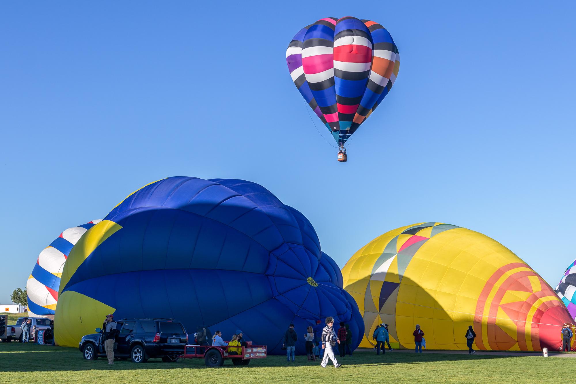 3-balloons-zebra.jpg