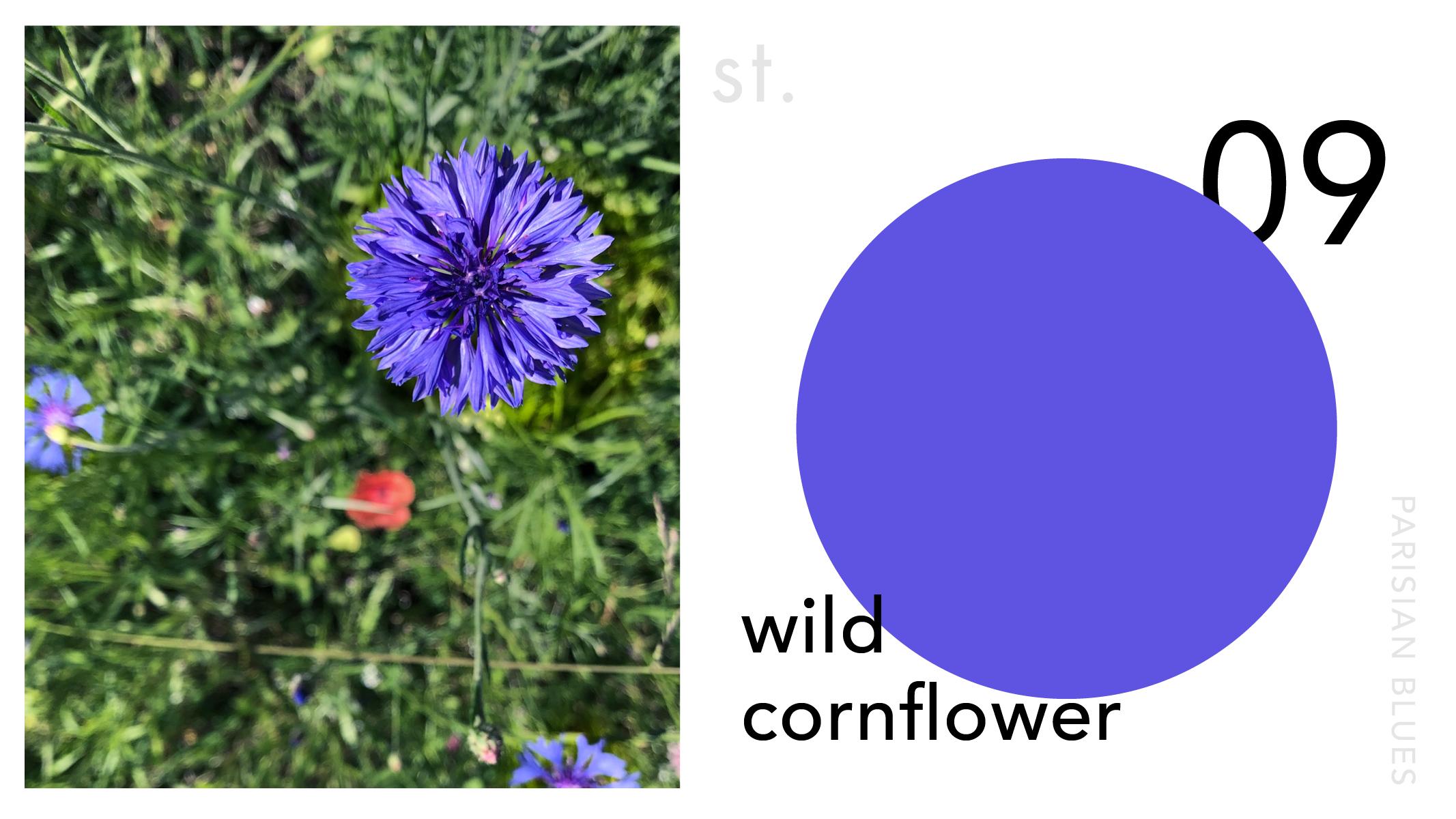 St.clement.creative.design.studio.brisbane.colour.palette.blue.9.jpg