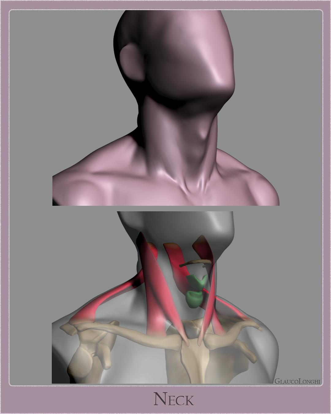 neck_04.jpg