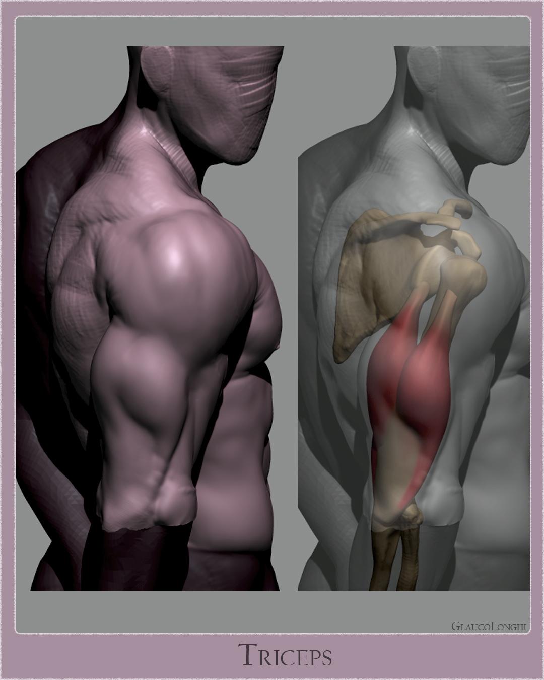 triceps_005.jpg