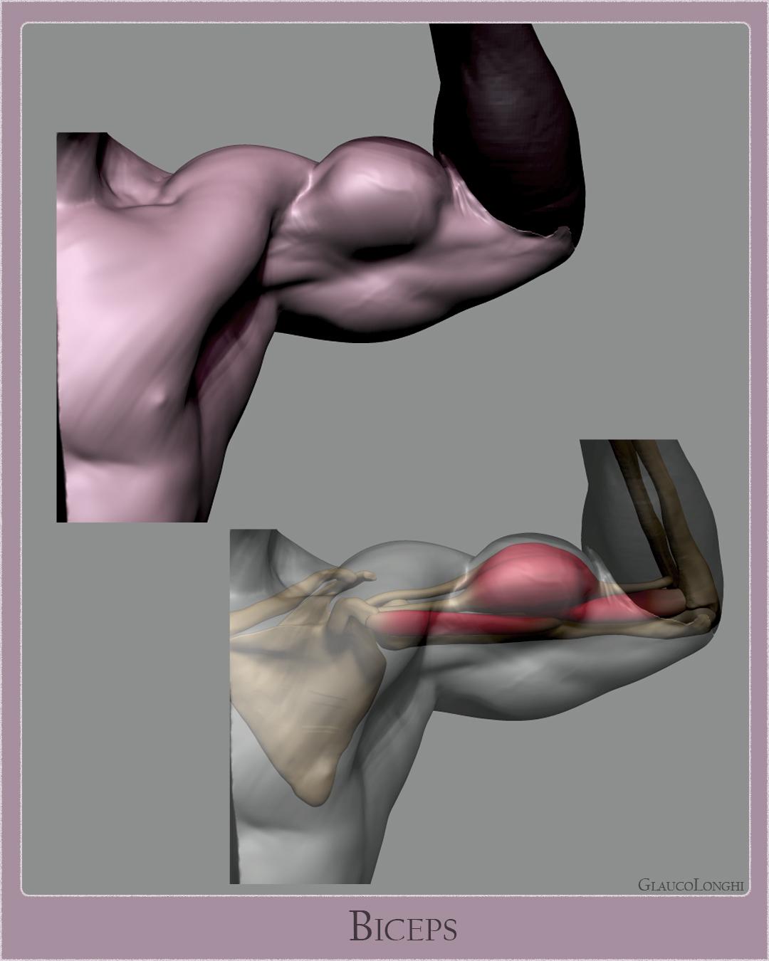biceps_002.jpg