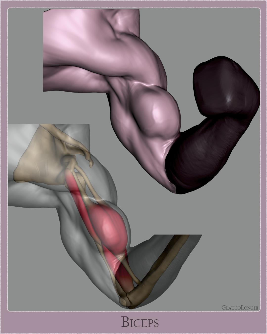 biceps_003.jpg