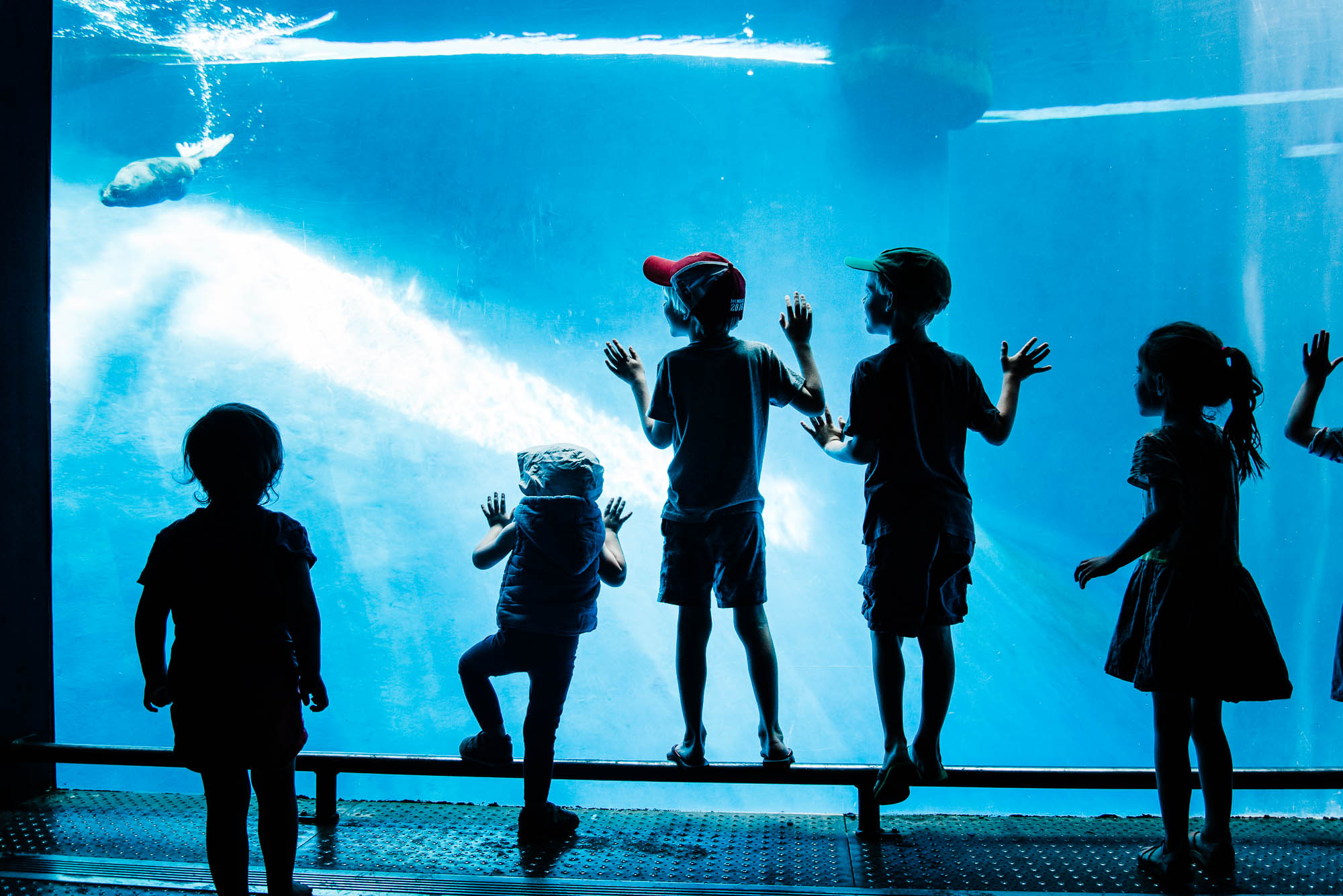 photography-mentoring-blogging-tips-kids-silhouttes-at-the-aquarium.jpg