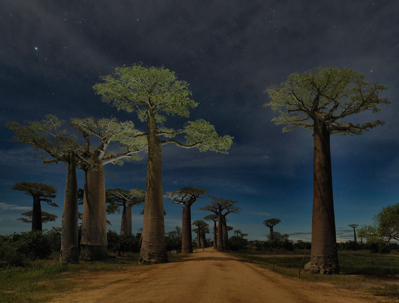 AH A Portrait of the Tree Documentry_.jpg