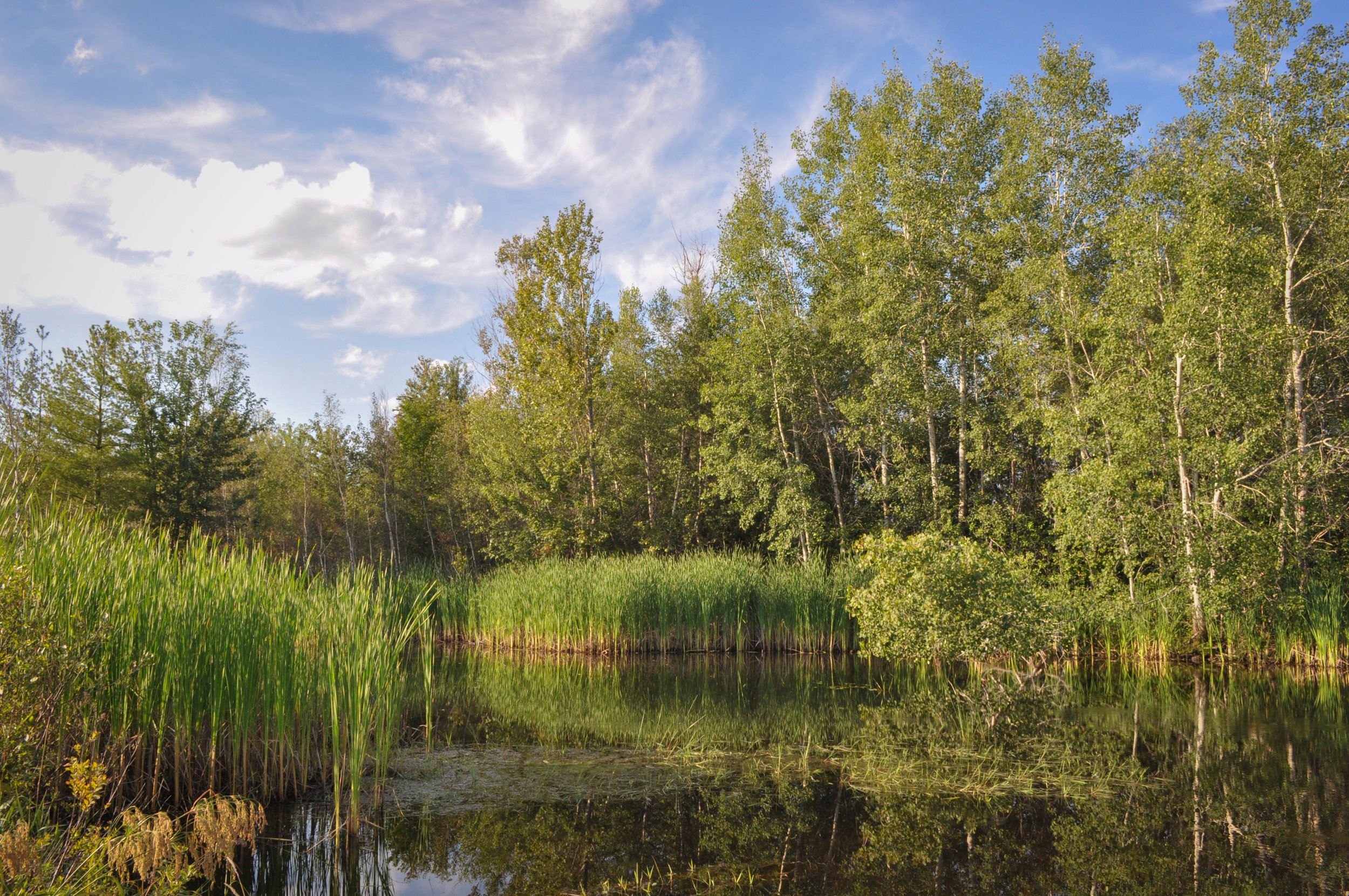 2009 Hyla Wetland  (1 of 1).jpg