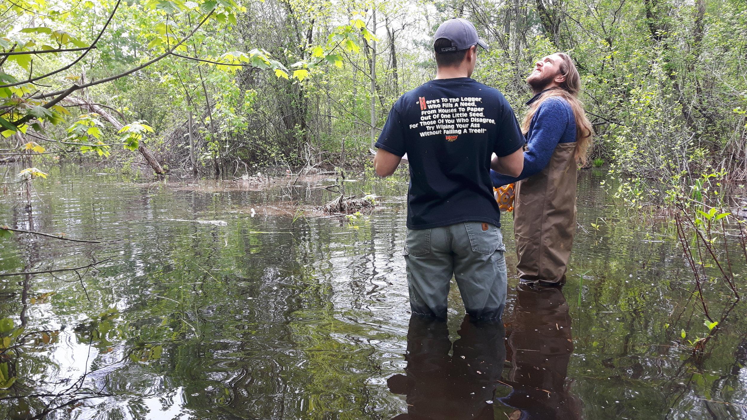 May_Flooded Hyla (2).jpg