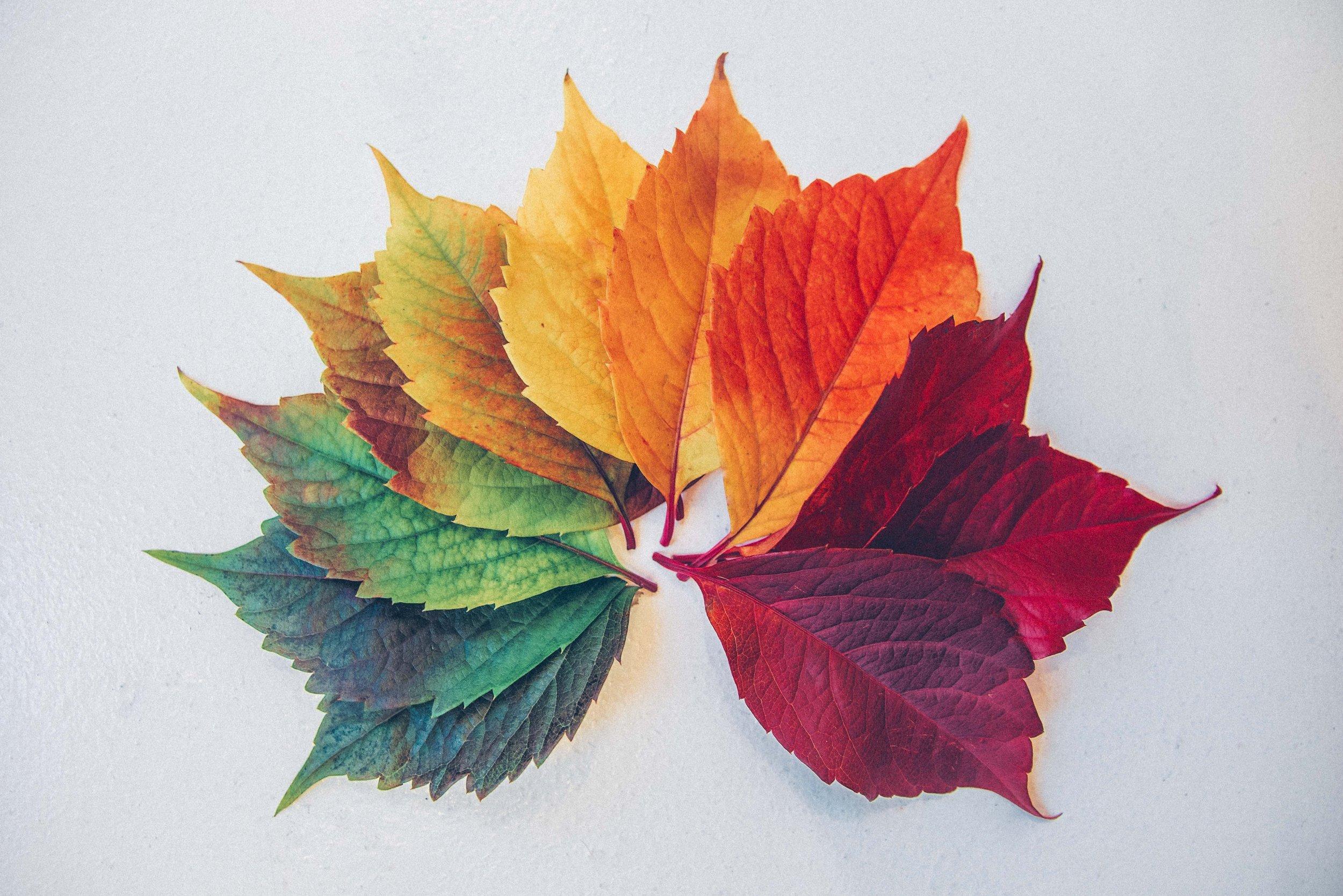 leaves_Chris_Lawton_Unsplash.jpg