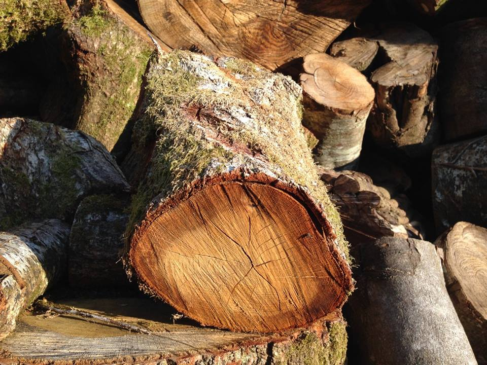 Seasoned Firewood Cardigan Logs - Seasoned Firewood available now. Please call 01239 811564 to arrange delivery