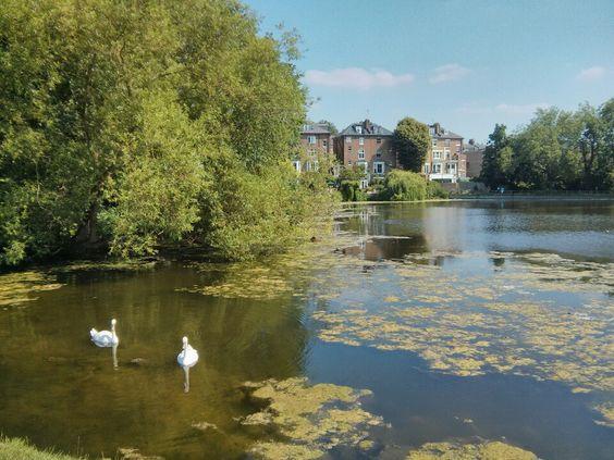 leonie macdonald swans.jpg