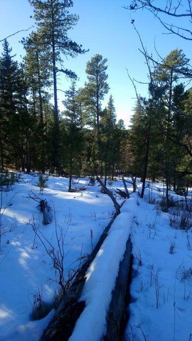 Willow Creek 2 .25 MP.JPG