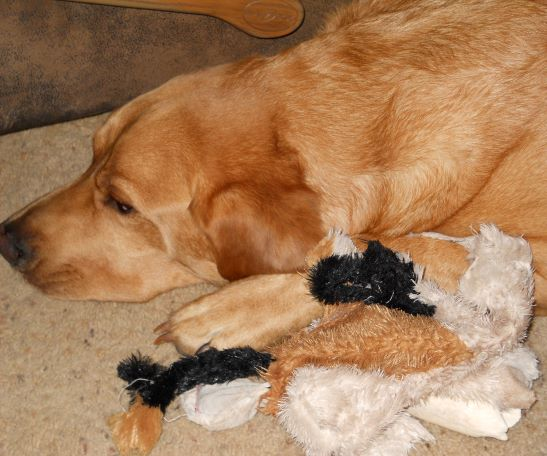 Favorite toy, bone to chew one, and warm place to sleep. Ahhhh….