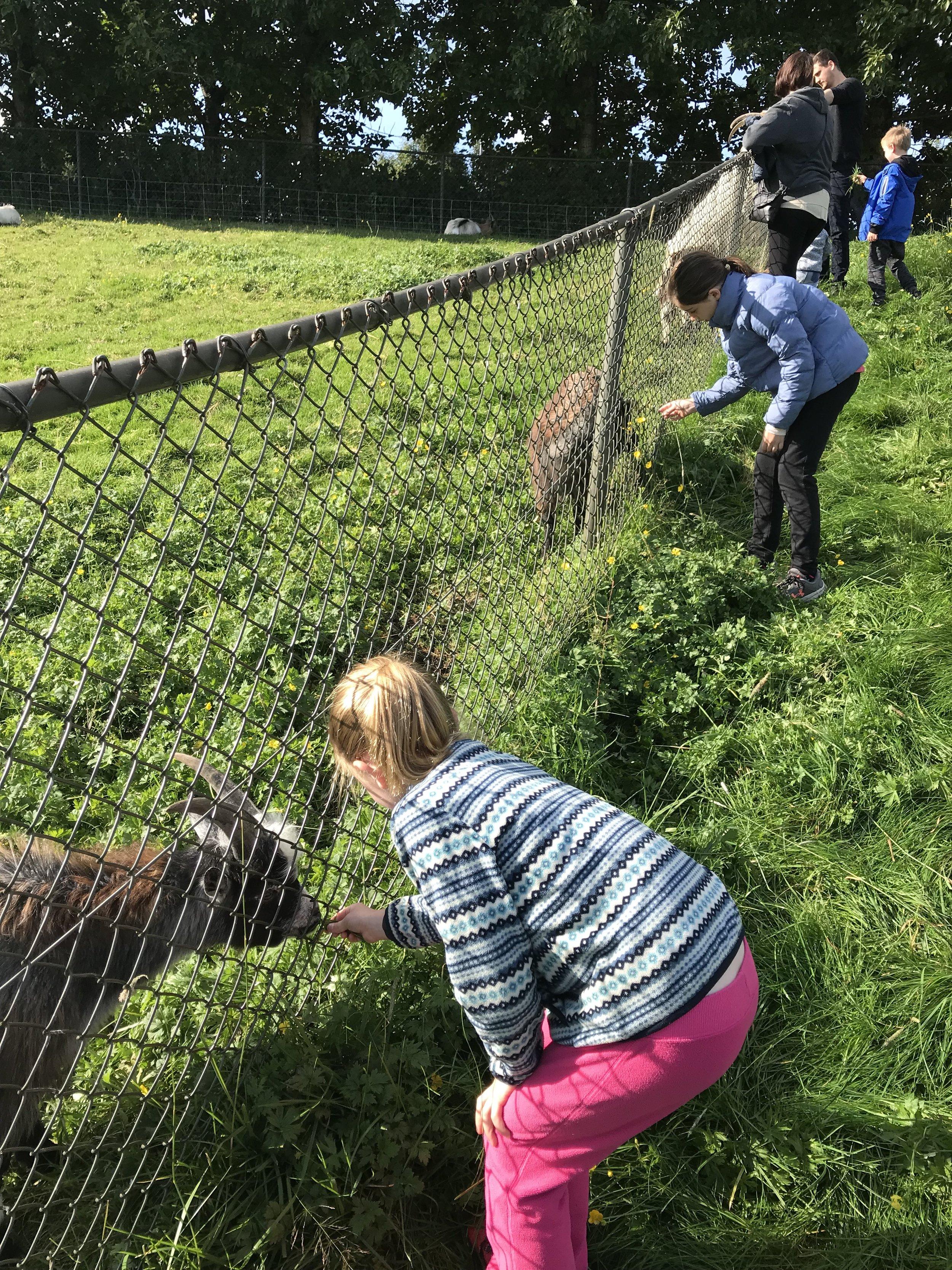Reykjavik's Family Park & Zoo