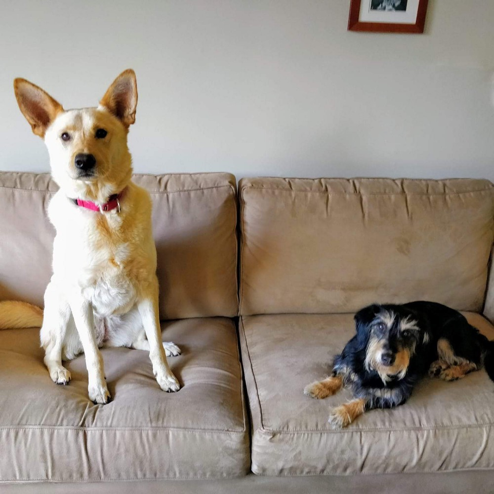 Amy's dog Meera and Jackie's dog Aero, both adopted from the same shelter